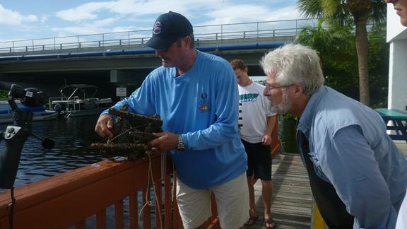 Photo 6 Live Oyster Habitat