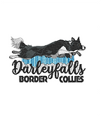 Darleyfalls Border Collies V2 Website PI