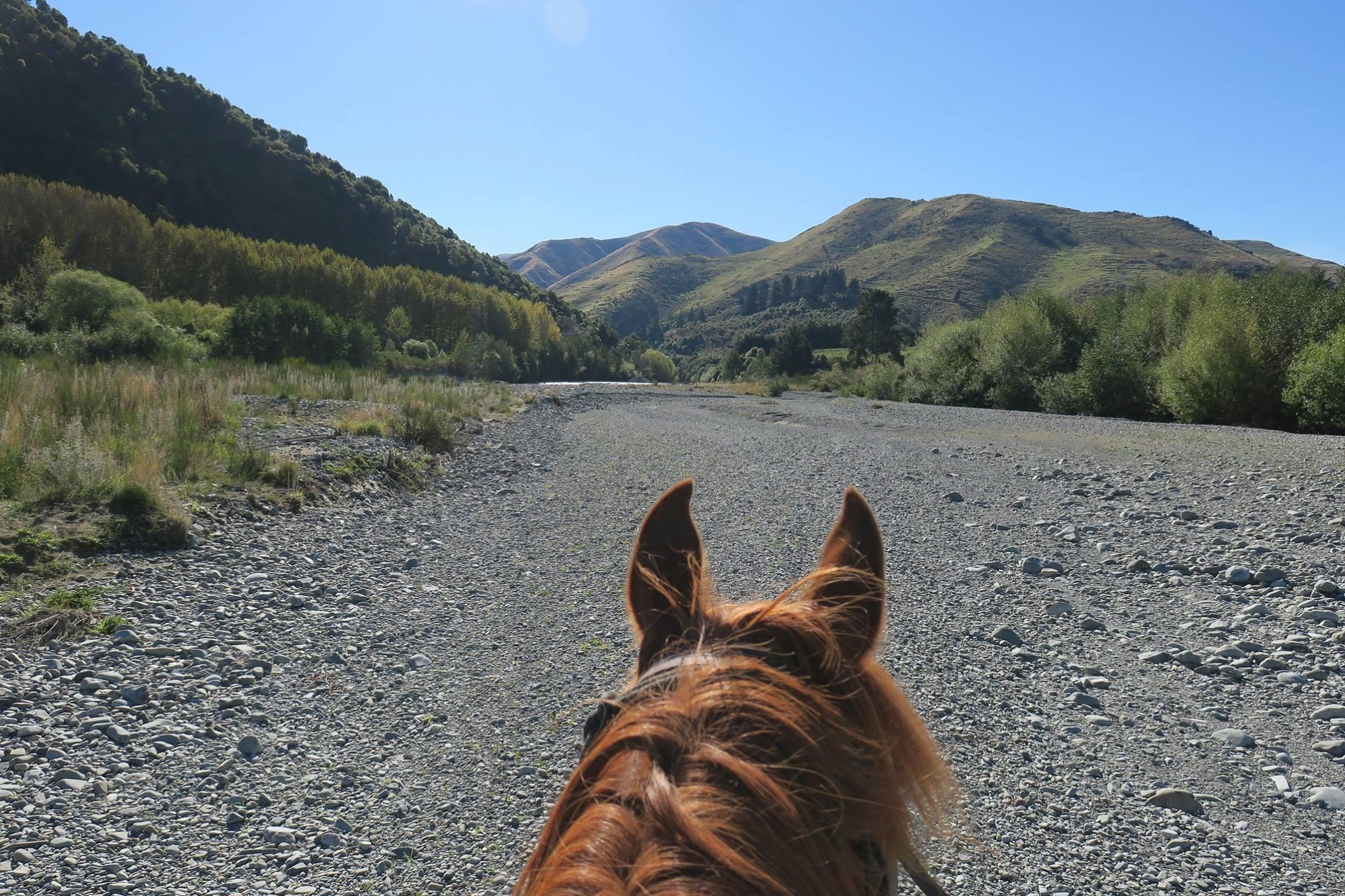 horse treking 3