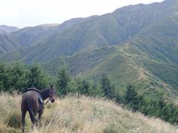 horse treking 2