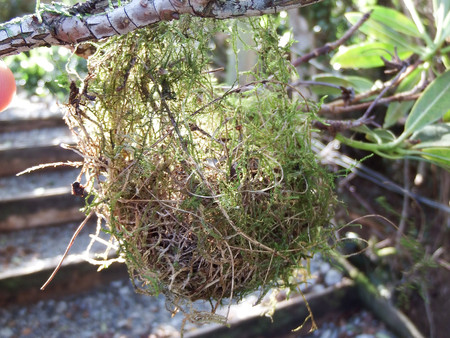 Rifleman Nest
