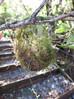 Rifleman Nest