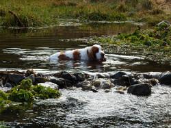 Streams nearby