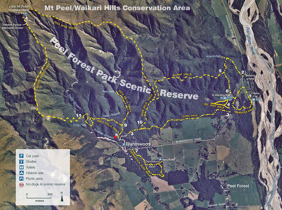 Walks in Peel Forest Scenic Reserve