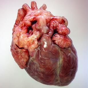 Silicone heart