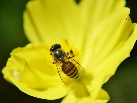 Over bloemetjes en bijtjes