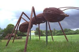 Ants_Dallas