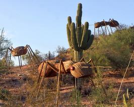 3Ants Desert Botanic