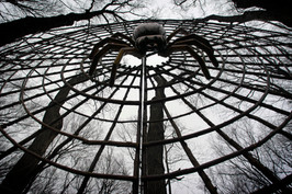 Black Walnut Spider_Web