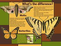 final.ButterfliesandMoths copy.jpg