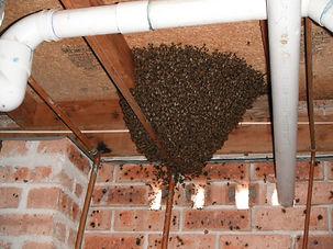 house hive.jpg