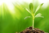 plant prop.jpg
