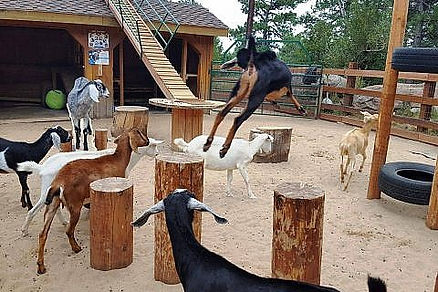 goatplayground-480x320.jpg