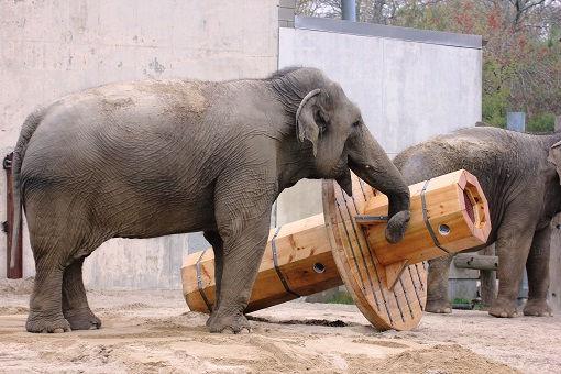 elephants-toys-buttonwood-park-zoo-new-b