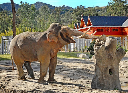Billy-at-the-enrichment-tree-1-13-11_Tad