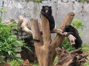 bear-enrichment-feeding.jpg