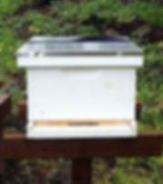 bee hive 1 level(1).jpg