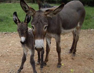 51. The Donkey Trail