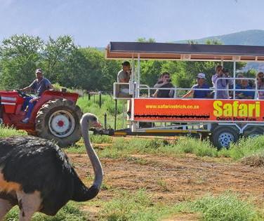 81. Safari Ostrich Show Farm