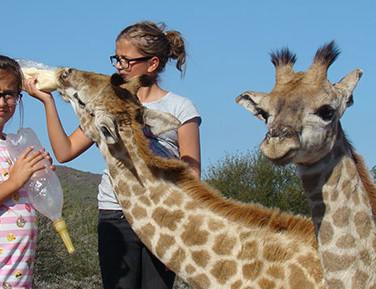 75. Giraffe Feeding Experience