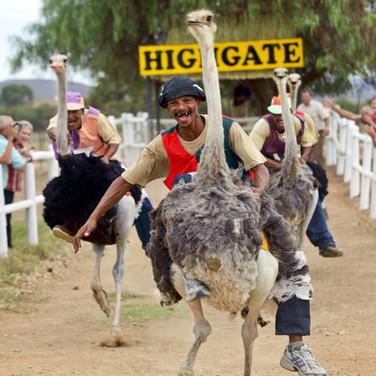 82.Highgate Ostrich Show Farm