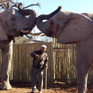 79. Buffelsdrift Game Lodge - Elephant Experiences