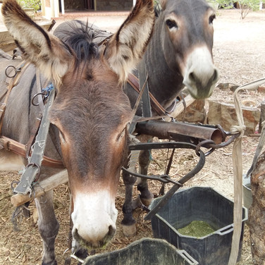 73. Donkey Cart Rides at Wilgewandel