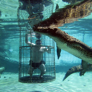 86. Cango Wildlife Ranch - Croc Diving