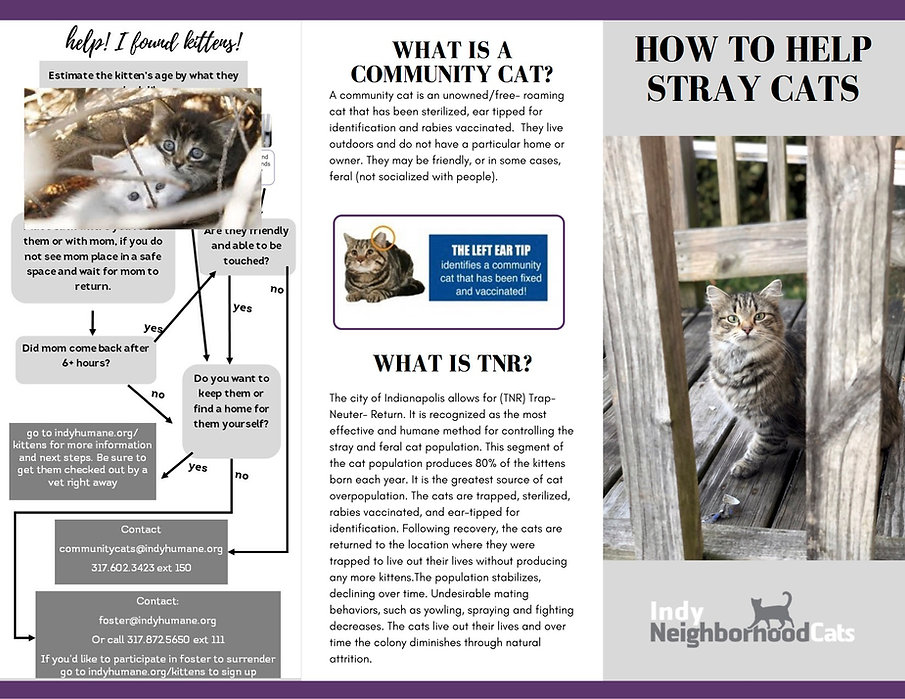 Color Community Cat Tri Fold.jpg