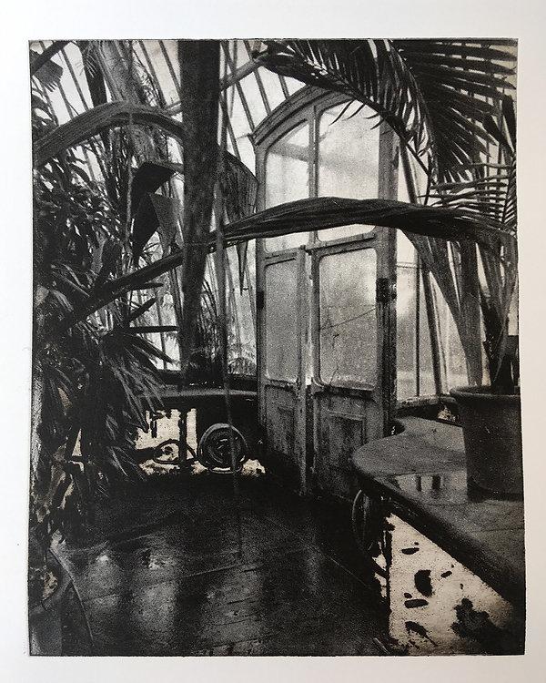 Through the glasshouse.jpeg