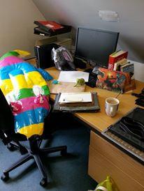 Blow up crocodile waiting at my desk