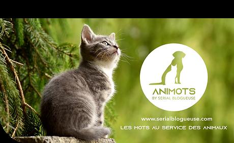 animots logo affiche 2.png