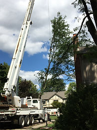 Crane setting tree onto drive.jpg