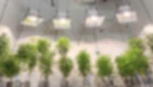 grow1.jpg