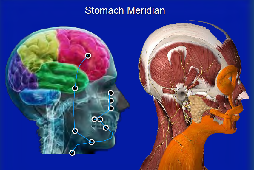 stomach control of frontal lobe