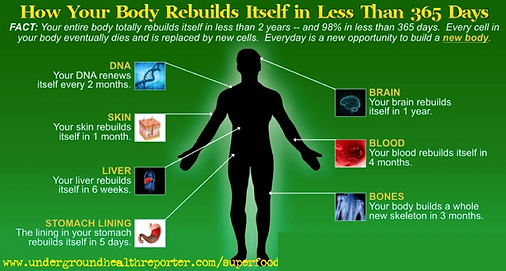 Body rebuilds itself in less than a year