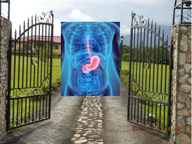 stomach is gateway to body