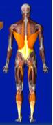 spleen circuit