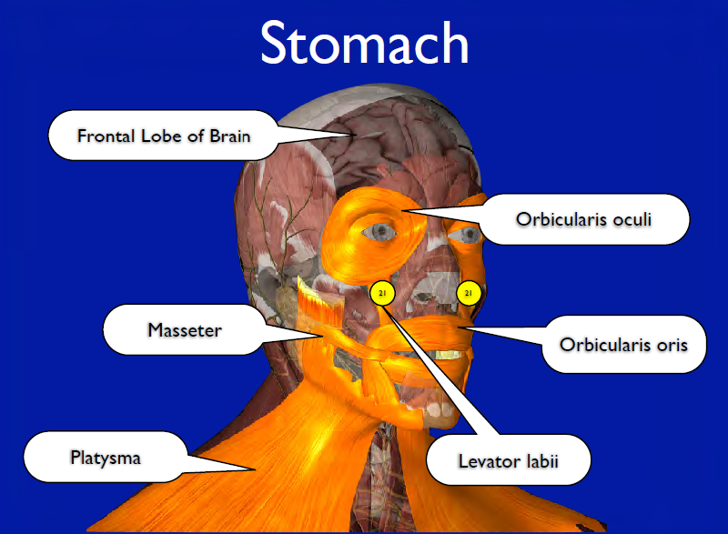 stomach muscle battery packs