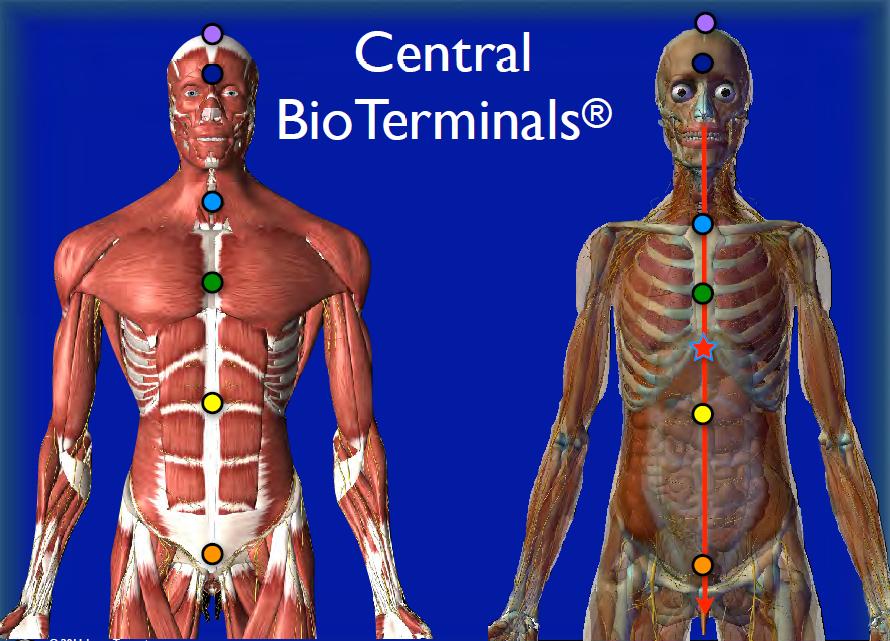 central bioterminals
