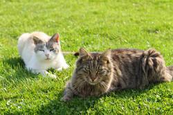beide Katzen