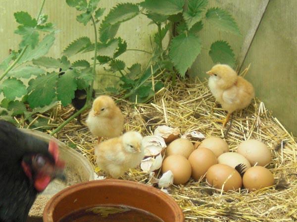 Nachwuchs am Bio Bauernhof