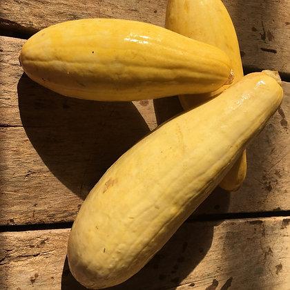 Yellow Zucchini - Calabacin Amarillo (16oz)