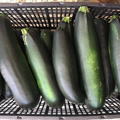 Green Zucchini - Calabacin Verde (16oz)
