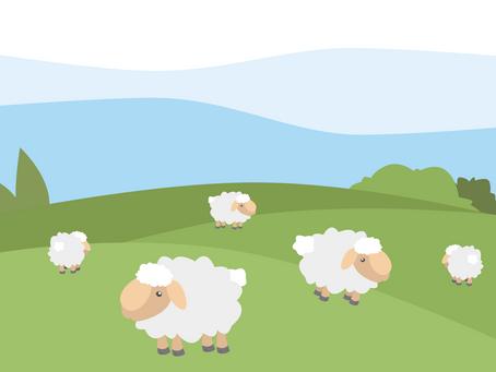 失去牧人的小羊