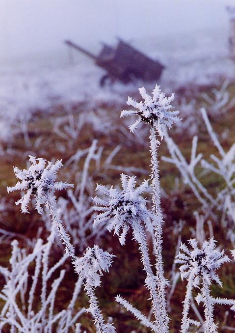 cencelladas del invierno