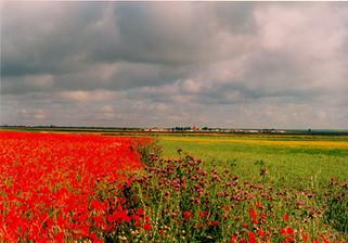 campos de la armuña