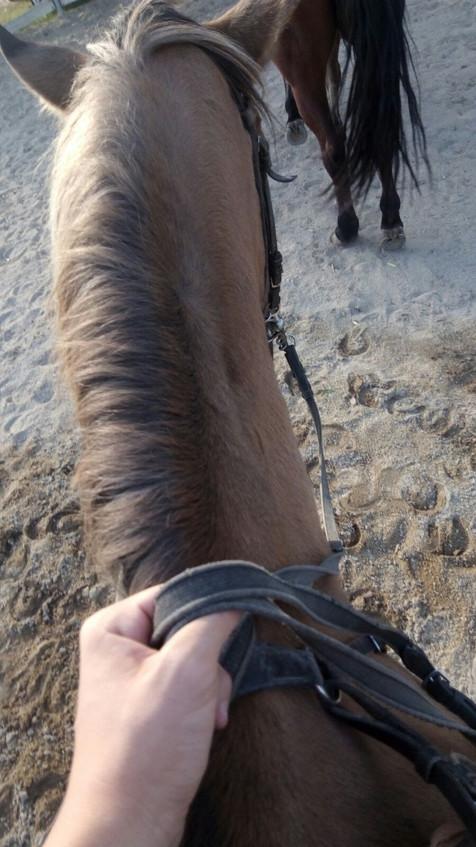 paseo caballo 2.jpg