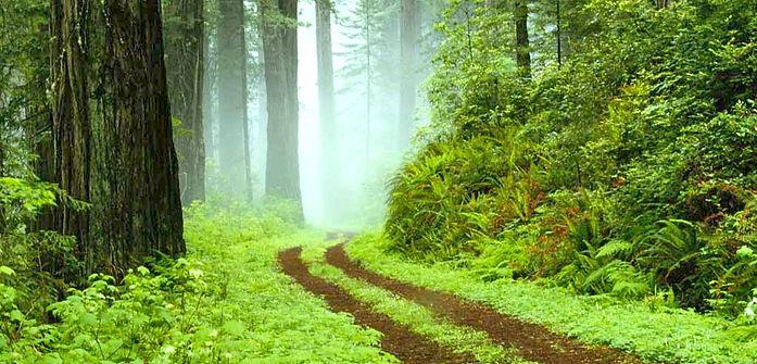 path+thru+trees.jpg