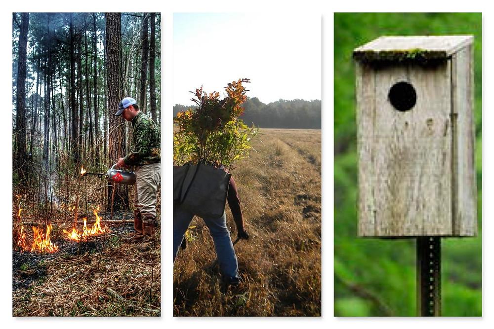blog 10 collage